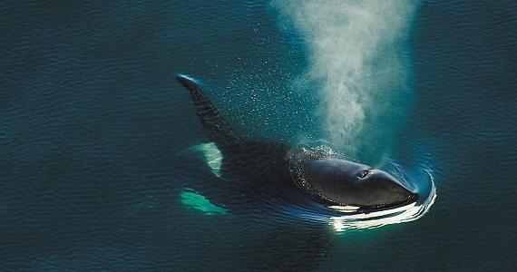 """Meere des Arktischen Ozeans im filmischen Meisterwerk """"Russland von oben"""", Deutschlandpremiere im Februar 2020, Tickets auf der Website der Artist Production Eventagentur"""
