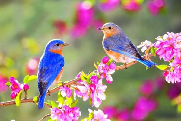 Птицы весной